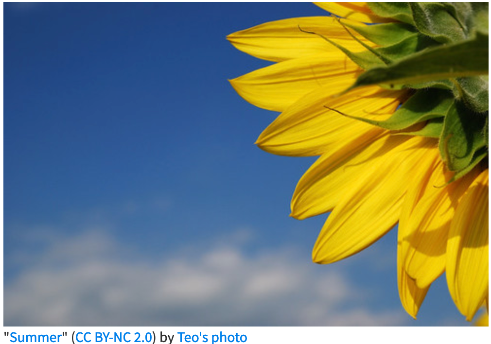 sunflower with sky in background